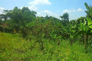 Grüne Landschaft mit Bananenstauden