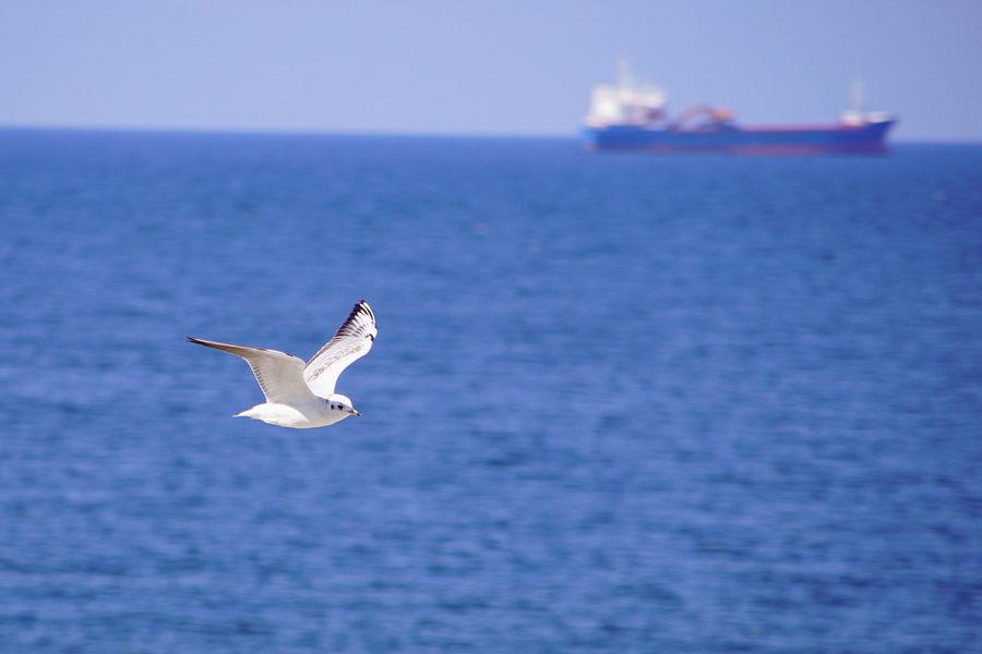 Meer, im Vordergrund fliegt eine Möwe, am Horizont ist unscharf ein Containerschiff zu sehen