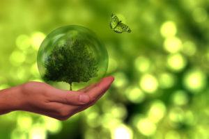 Hand, die eine Glaskugel hält, in der ein Baum steht. Ein Schmetterling und im Hintergrund Grün
